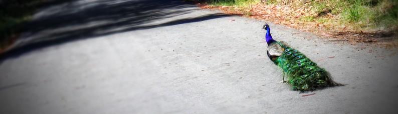 cropped-2IMG_0104web.jpg
